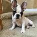 frankie-morgans-pup