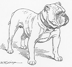 The Old English Bulldogge